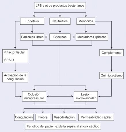 Tratamiento de hipertensión endógena de ouabaína