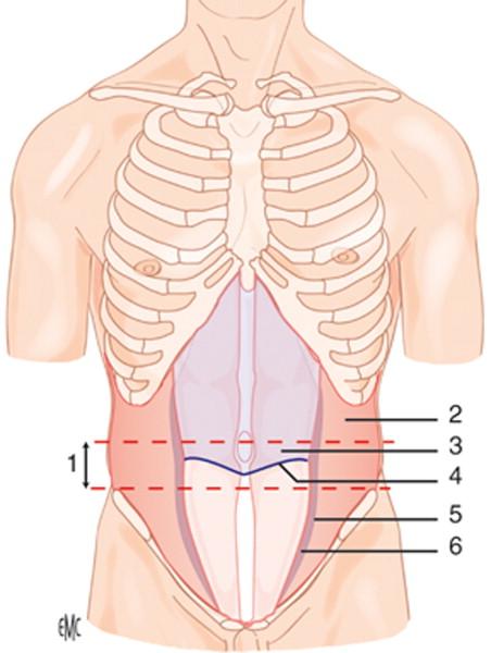 Anatomía quirúrgica y vías de acceso del abdomen - ScienceDirect