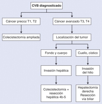 cancer vesicula biliar fisiopatologia corpul uman mănâncă paraziți
