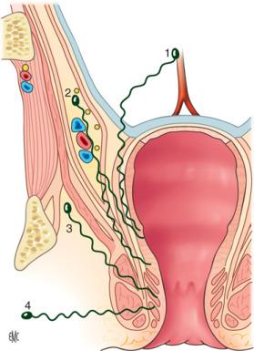 innervazione della prostata pdf 2016