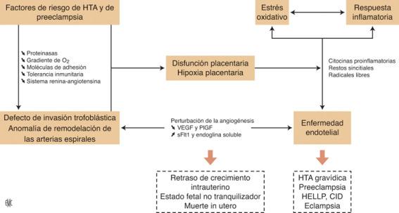 Presión arterial preocupante durante el embarazo