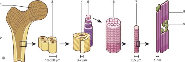 Biomecánica del hueso: aplicación al tratamiento y a la ...