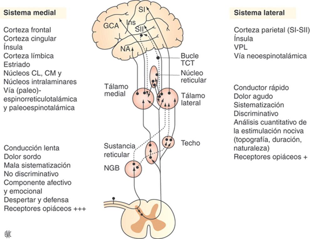 Fisiología del dolor - ScienceDirect
