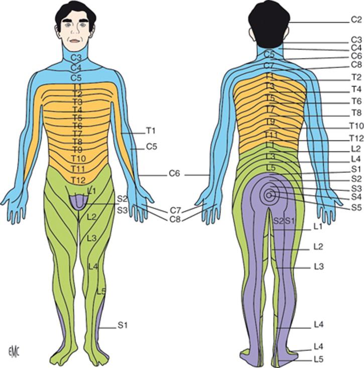 La sesión de masaje - ScienceDirect