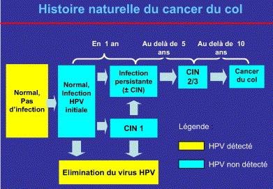 hpv cancer du col)