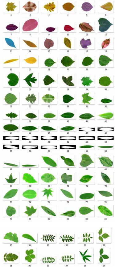 Plant leaf classification using multiple descriptors: A hierarchical