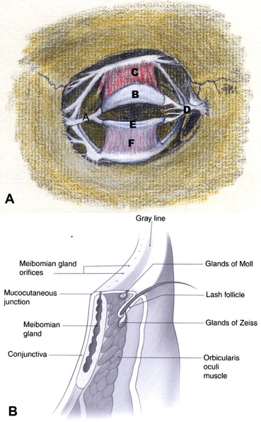 Reconstructive Options For The Medial Canthus And Eyelids Following