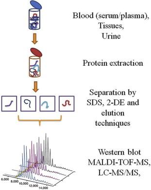 Proteins Are Potent Biomarkers To Detect Colon Cancer Progression Sciencedirect