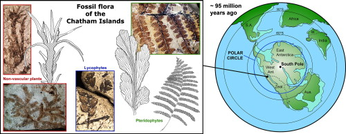 heterospory and seed habit in pteridophytes pdf
