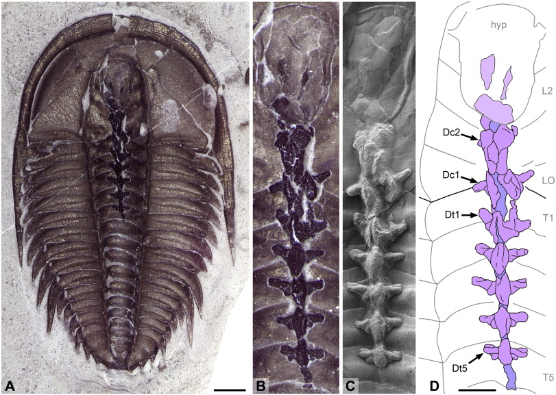 Exceptionally Preserved Late Cambrian Fossils From The Mckay Group