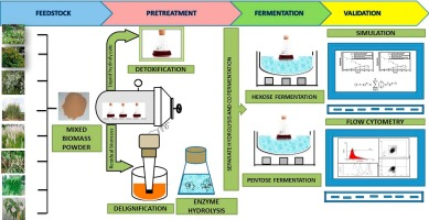 Physical insights of ultrasound-assisted ethanol production