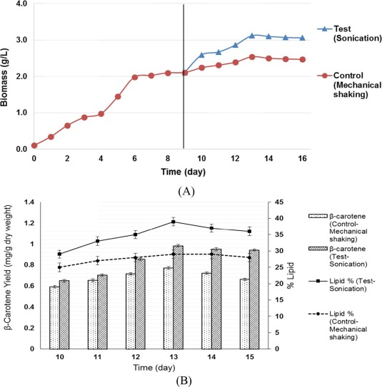 Investigations in ultrasonic enhancement of β-carotene production by