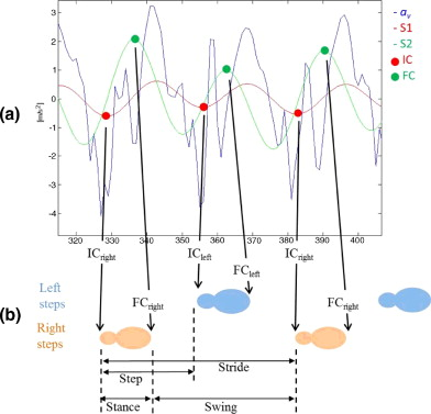 Instrumenting gait with an accelerometer: A system and