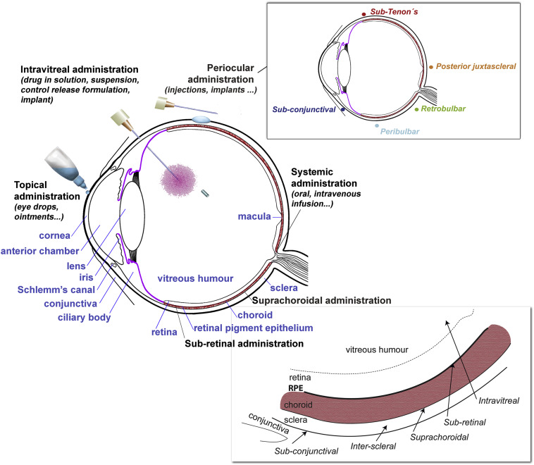 Pharmacokinetic aspects of retinal drug delivery - ScienceDirect