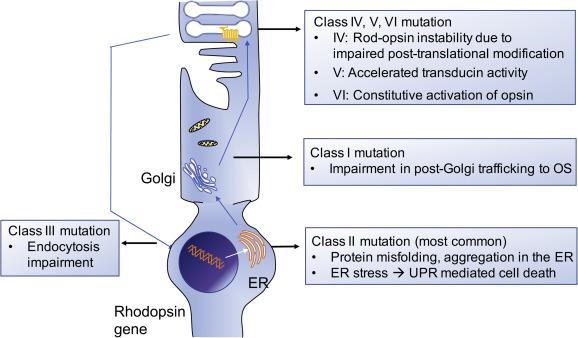 Molecular genetics and emerging therapies for retinitis