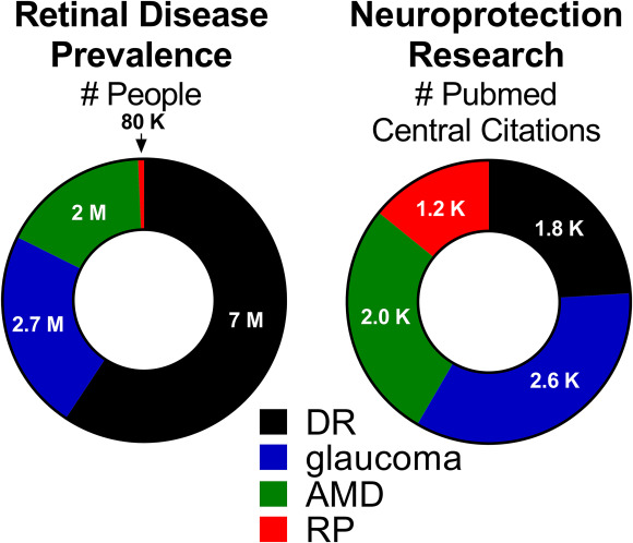 Neuroprotective strategies for retinal disease - ScienceDirect