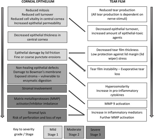 Neurotrophic keratopathy - ScienceDirect