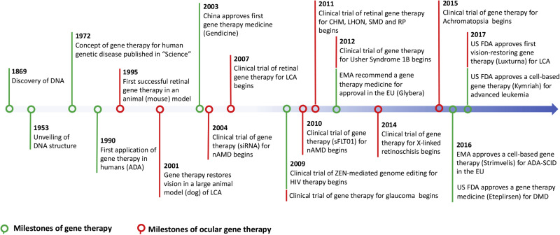 Gene therapy for visual loss: Opportunities and concerns