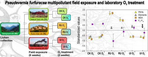 Beyond ozone-tolerance: Effects of ozone fumigation on trace