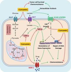 Hepatic cancer receptor. Manzat Saplacan Roberta Maria - Google Scholar Henvisninger