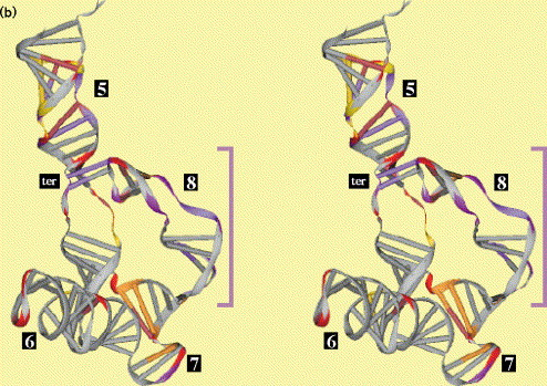Comparative analysis of tertiary structure elements in signal