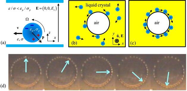 Active colloids in liquid crystals - ScienceDirect