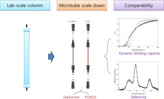 Radial Scale Down Of Packed Bed Chromatography In A Thin Cylindrical