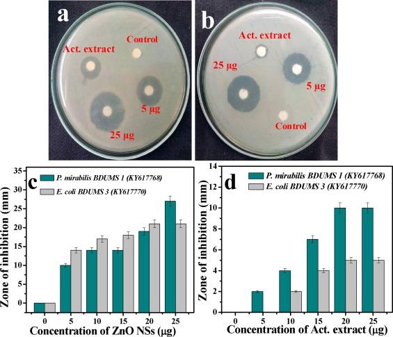 Antibiofilm activity of zinc oxide nanosheets (ZnO NSs
