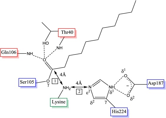 Molecular Rules For Selectivity In Lipase Catalysed Acylation Of