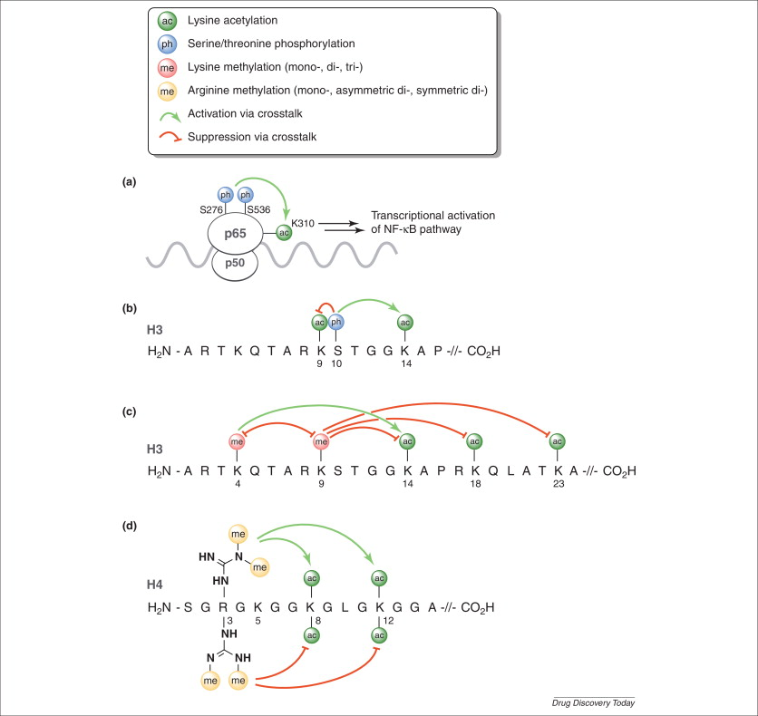 Small molecule inhibitors of histone acetyltransferases and
