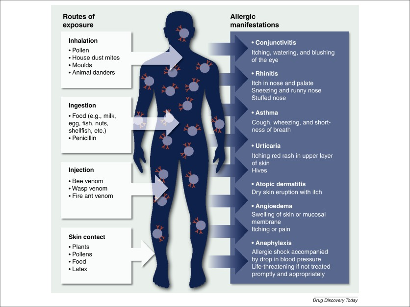 Allergy immunotherapy: the future of allergy treatment
