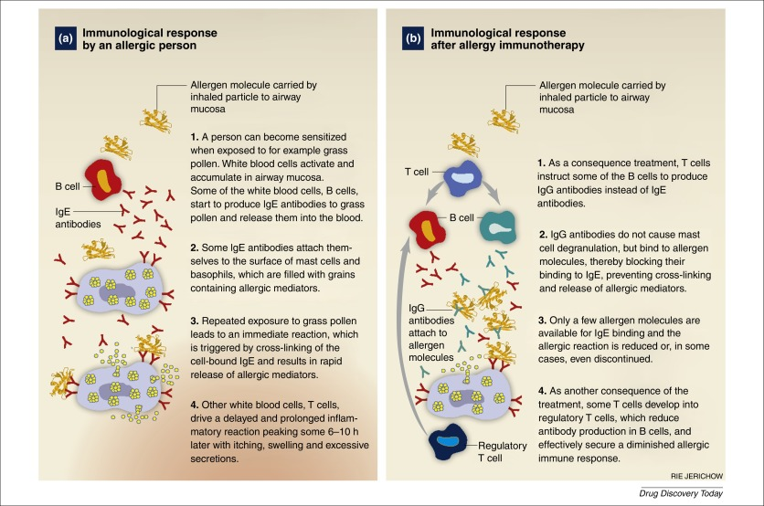 Allergy Immunotherapy The Future Of Allergy Treatment Sciencedirect