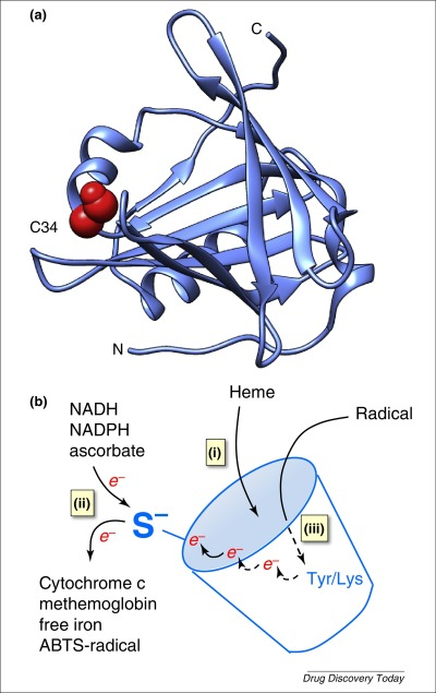 alfa 1 mikroglobulin
