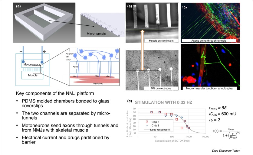 A human-on-a-chip approach to tackling rare diseases - ScienceDirect
