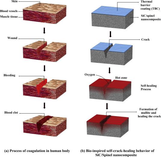 Crack-healing in ceramics - ScienceDirect