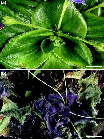 Plant Desiccation Tolerance Pdf