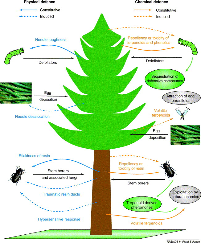 Direct And Indirect Chemical Defence Of Pine Against Folivorous