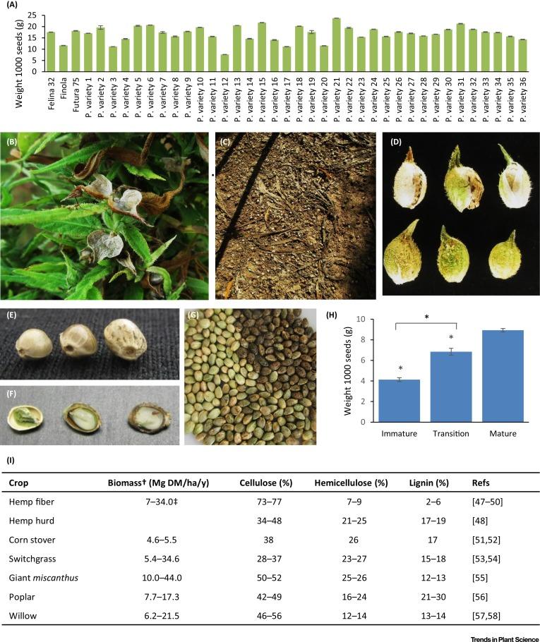 remedy cbd flower 3 5 grams 14 38