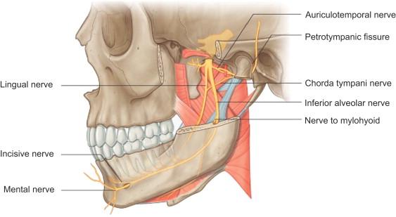 Neurological Influences Of The Temporomandibular Joint Sciencedirect
