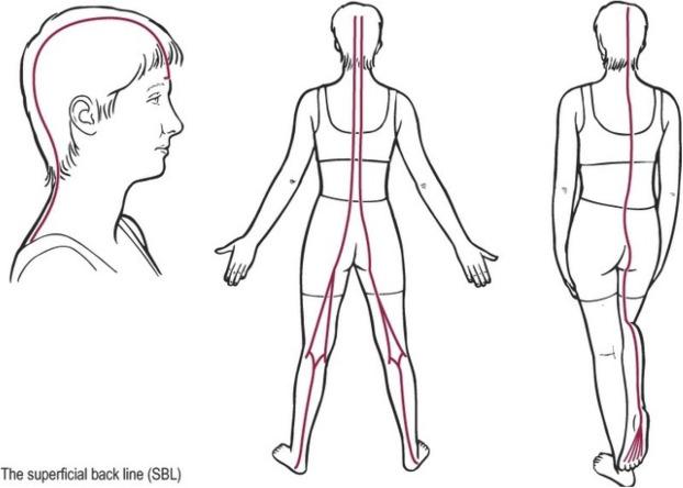 Effect of remote myofascial release on hamstring flexibility
