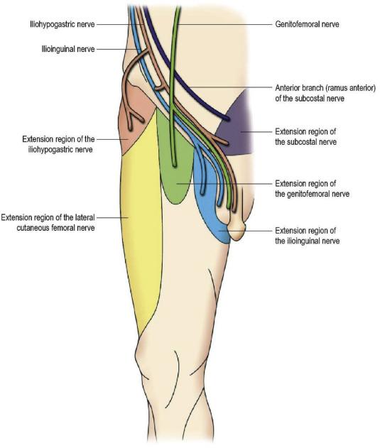 Visceral Therapy Prostatitis