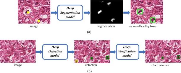 DeepMitosis: Mitosis detection via deep detection