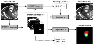 Disentangled representation learning in cardiac image