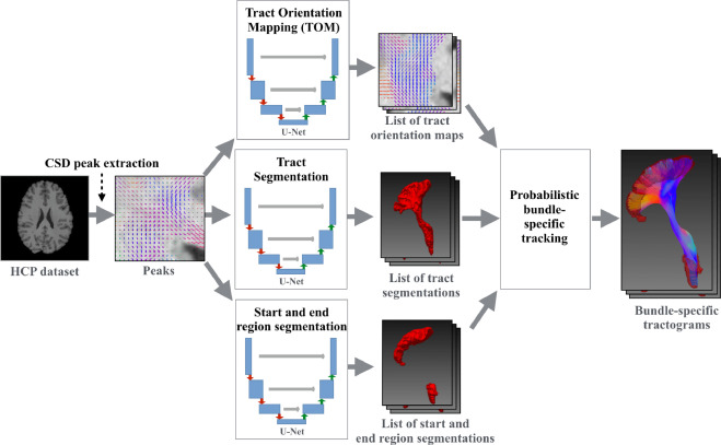 Combined tract segmentation and orientation mapping for ...