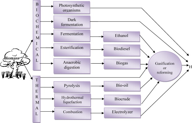 Biomass energy and the environmental impacts associated with its
