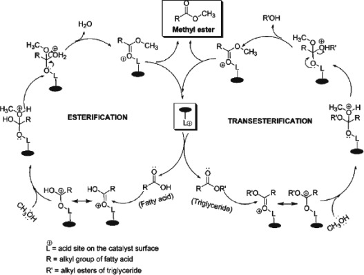 Biodiesel From Vegetable Oils