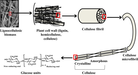 Revisiting cellulase production and redefining current
