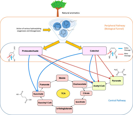 Microbial treatment of industrial lignin: Successes, problems and