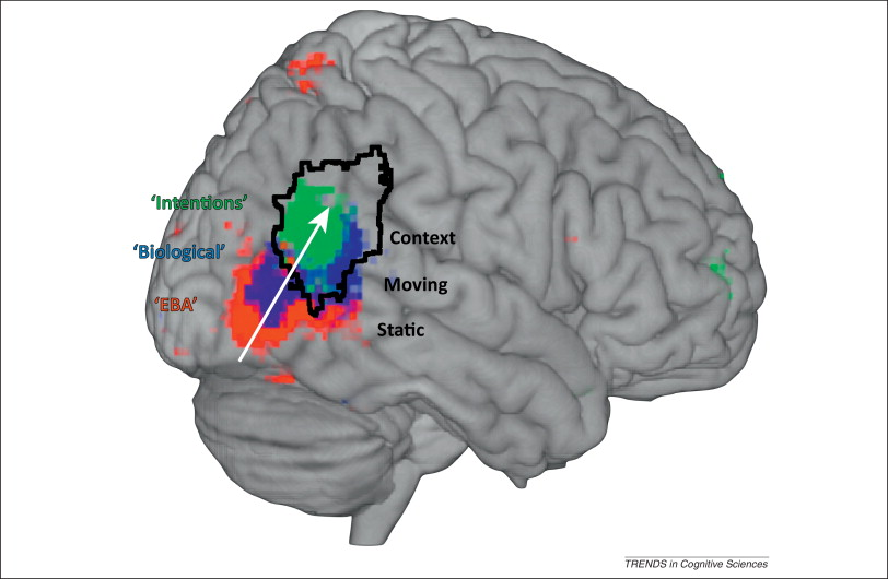 A Nexus Model Of The Temporalparietal Junction Sciencedirect