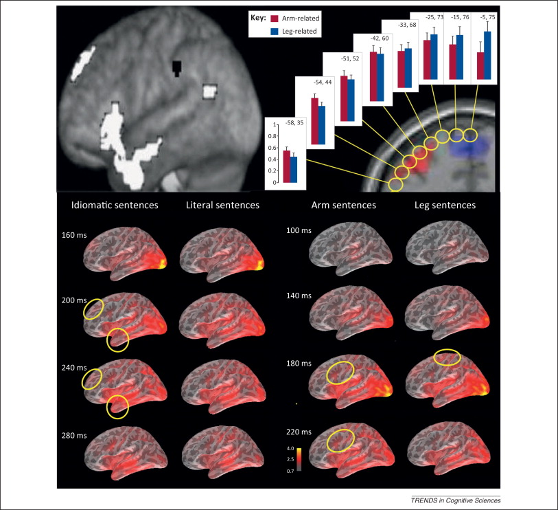How Neurons Make Meaning Brain Mechanisms For Embodied And Abstract